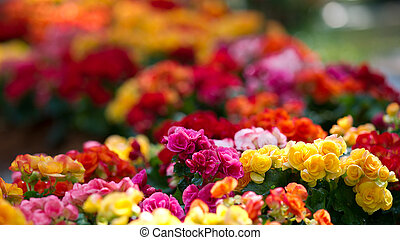 Flowerbed with multicolored flowers
