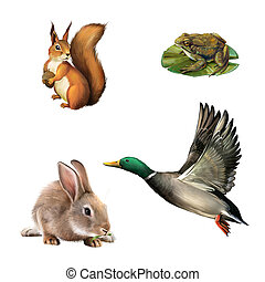 Squirrel, toad, rabbit and drake - Squirrel, toad, rabbit,...