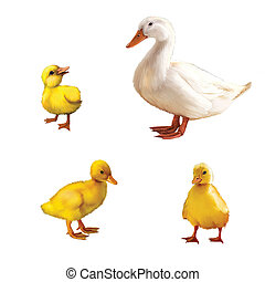 Duck family - little ducklings and mother duck. llustration...