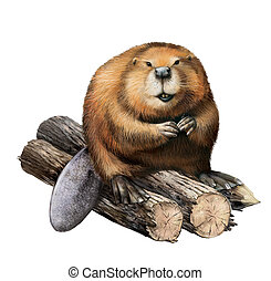 Adult Beaver sitting on logs. Isolated illustration on a...