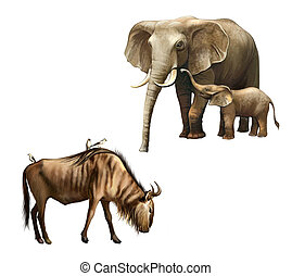 Elephant family: mother and baby. Wildebeest with birds...