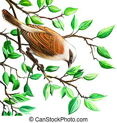 Shrike. Bird on the tree branch. Isolated realistic...