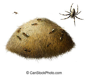 Anthill with ants. Spider. Isolated realistic illustration...