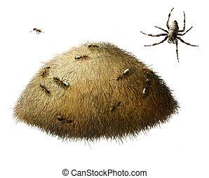 mrowisko, mrówki, pająk