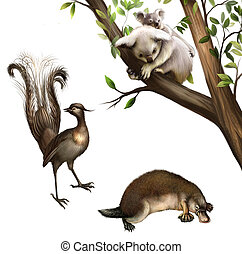 Australian animals: koala, platypus and lyrebird. Isolated...