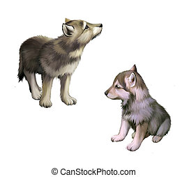Two baby wolfs, puppies realistic illustration on white...