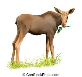 Baby moose eating tree branch - Baby moose eating grass....