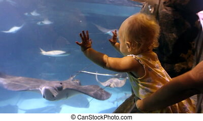 Baby Watching Sting Rays - Slow motion shot of a baby...