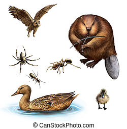 Owl, Beaver, Spider, Ants, Duck and duckling. Isolated...