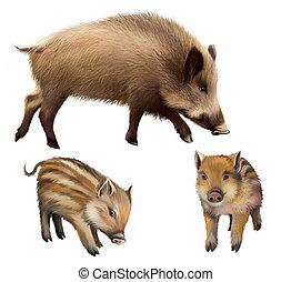 verrat, familly, deux, peu, Porcelets, mère, cochon
