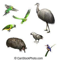 Ostrich Emu, budgies,Grey Parrot, green Parrot, echidna...