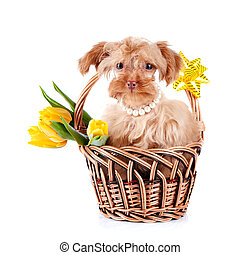 Doggie in a basket with flowers. - Decorative doggie in a...