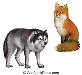 Fox and Wolf - Sitting Fox and Wolf Isolated realistic...