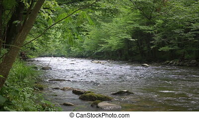 Forest Stream 1 - Scenic river through the forest in the...