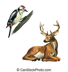 Woodpecker and Deer - Woodpecker on the tree and resting...