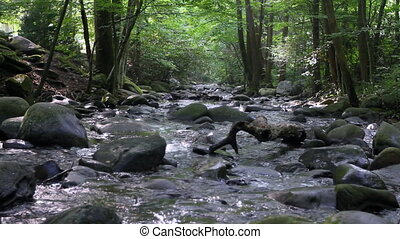 Forest Stream 7 - Scenic river through the forest in the...