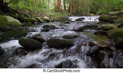 Forest Waterfall - River water falling over mossy rocks in...