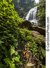 Water fall in spring season located in deep rain forest jungle. Mae Klang Luang Waterfall, Chiang Mai, Thailand.