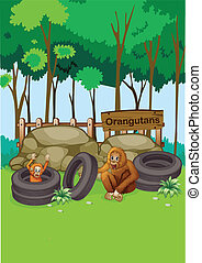 Orangutans at the zoo - Illustration of the Orangutans at...