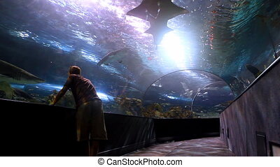 Shark Tank - A man stares face to face with a large shark in...