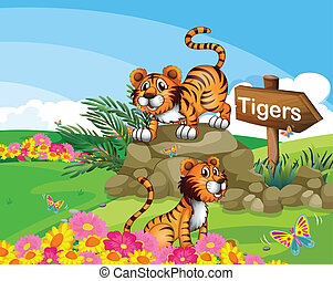 Two tigers beside a signboard - Illustration of the two...