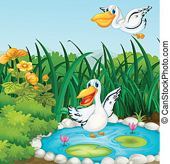 A pond with ducks - Illustration of a pond with ducks