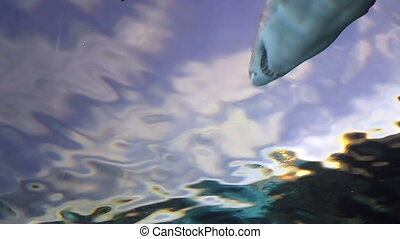 Two Sharks from Low Angle