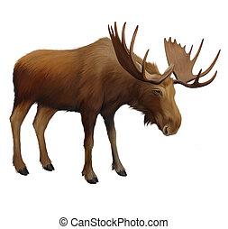 Moose Adult male elk Isolated Illustration on white...