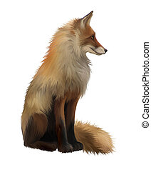 Adult fox, Side view Sitting Isolated Illustration on white...