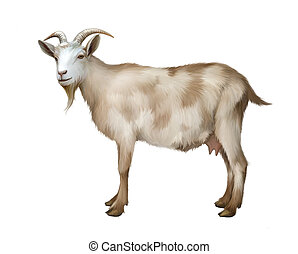Spotted female adult Goat. Isolated Illustration on white...