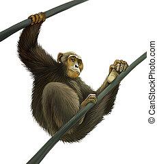 Chimpanzee climbing on liana