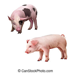 Two little piglets pink and spotted. Isolated Illustration...
