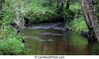 meandering forest stream - view of the meandering forest...