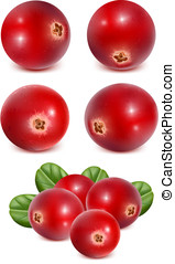 Ripe red cranberries with leaves vector illustration