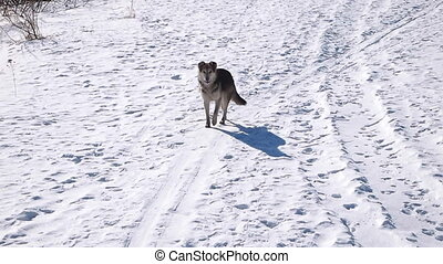 dog on the snow