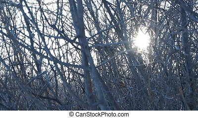 sunlight - bushes, wind, sunlight