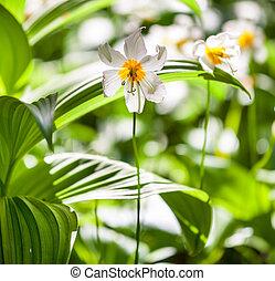 Spring flowers - spring flowers