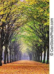 Autumn lane - Beautiful colored trees in het Amsterdamse bos...