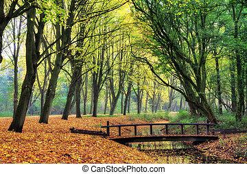 Forest bridge - Bridge in the forest in autumn in het...