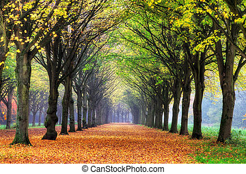 Dreamy autumn lane - Beautiful colored trees in het...
