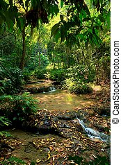 tropical water source - water source from green fertile...