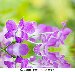 pink orchid is reflected in water against bright green foliage