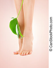 female legs with green leaf - picture of female legs with...