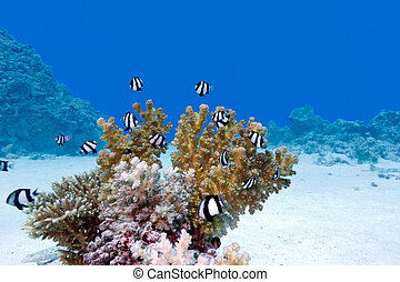 coral reef with hard coral and exotic fishes at the bottom...