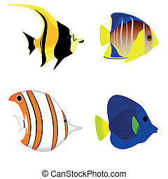 Set of a tropical fish isolated