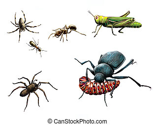 Insects: bee, ants, ground beetle eating caterpillar, bug...