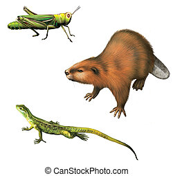 Grasshopper, Beaver, and Lizard. Isolated realistic...