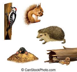 Squirrel, chipmunk, hedgehog, Woodpecker and a mole -...