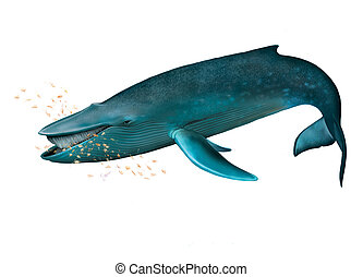 Young Blue whale. Isolated realistic illustration on white...
