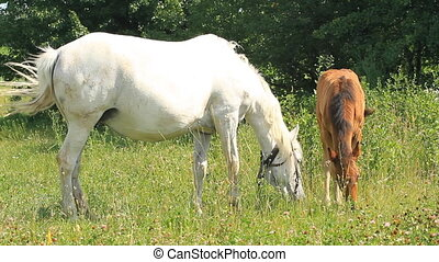 Mother and baby horse - Beautiful mother and baby horse